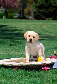 PUP 05 CE0025 01