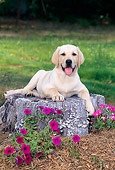 PUP 05 CE0026 01