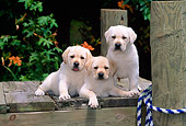 PUP 05 CE0029 01