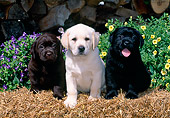 PUP 05 CE0031 01