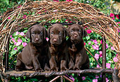 PUP 05 CE0032 01