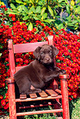 PUP 05 CE0034 01