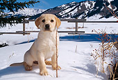PUP 05 DB0009 01