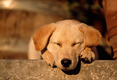 PUP 05 DB0015 01