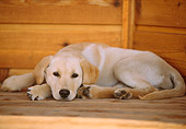 PUP 05 DB0017 01