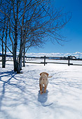 PUP 05 DB0020 01