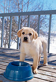 PUP 05 DB0022 01