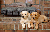PUP 05 DC0008 02
