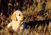 PUP 05 DS0001 01