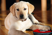 PUP 05 DS0002 01