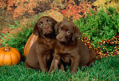 PUP 05 FA0001 01