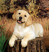 PUP 05 FA0002 01