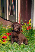 PUP 05 FA0009 01