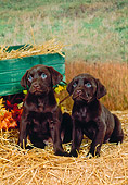 PUP 05 FA0012 01
