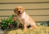 PUP 05 FA0013 01