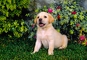 PUP 05 FA0014 01