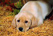 PUP 05 FA0015 01