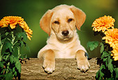 PUP 05 GR0002 02