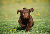 PUP 05 GR0009 01