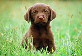 PUP 05 GR0013 02