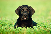 PUP 05 GR0017 02