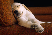 PUP 05 GR0029 01