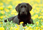PUP 05 GR0034 01