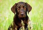 PUP 05 GR0036 01