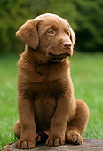 PUP 05 GR0043 01