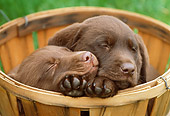 PUP 05 GR0048 01