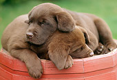 PUP 05 GR0049 01
