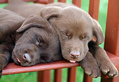 PUP 05 GR0051 01