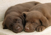 PUP 05 GR0052 01