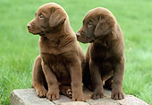 PUP 05 GR0054 01