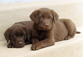 PUP 05 GR0055 01