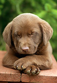 PUP 05 GR0058 01