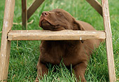 PUP 05 GR0061 01
