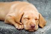 PUP 05 GR0063 01