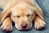 PUP 05 GR0064 01
