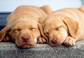 PUP 05 GR0065 01
