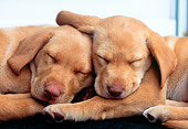 PUP 05 GR0066 01
