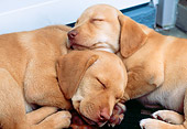 PUP 05 GR0067 01
