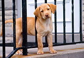 PUP 05 GR0073 01