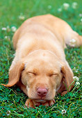 PUP 05 GR0078 01