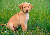 PUP 05 GR0083 01