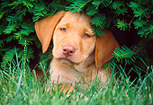 PUP 05 GR0088 01