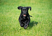 PUP 05 GR0101 01