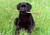 PUP 05 GR0113 01