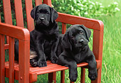 PUP 05 GR0124 01