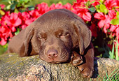 PUP 05 GR0135 01